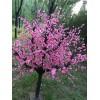 北京仿真桃花树厂家长期定做批发价格15810223619