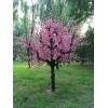 造型树仿真树桃花树{枯树}柳树玻璃钢树厂家