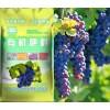 药材有机肥,苗木有机肥,葡萄有机肥,茶叶有机肥