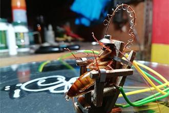 自制电椅处死蟑螂 行为艺术OR虐待动物