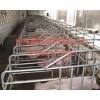世昌畜牧母猪定位栏猪围栏保育床货源充足欢迎订购