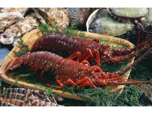 厦门进口新西兰龙虾报关代理公司