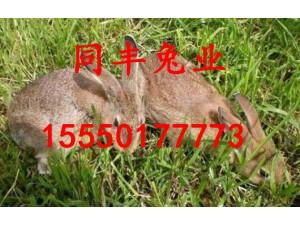 低价出售杂交野兔农村散养杂交野兔技术