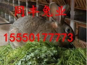 野兔养殖联盟杂交野兔养殖技术