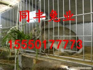浙江杂交野兔养殖基地