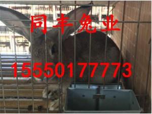 山东杂交野兔养殖基地