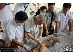 针刀微创临床应用尸体解剖高级研修班