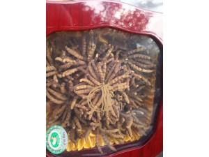 北京海淀高价回收冬虫夏草海参藏红花海参鹿茸