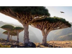 北京订做仿真树厂家出售假树批发