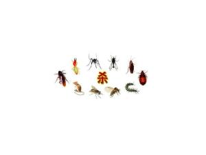 东莞市永和灭白蚁、灭老鼠、灭蟑螂、灭苍蝇、灭蚊子