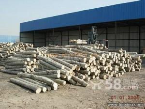 在淄博各地高价收杨树