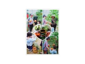 长沙有机绿色蔬菜销售,所有蔬菜不用任何激素化肥催生催长
