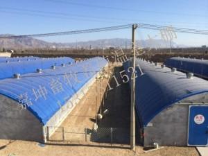 椭圆管定制棚 猪场自动化温室大棚 保温鸡舍大棚 搭建温室大棚