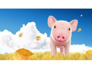 广东养猪场环评现状监测实验室