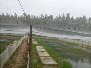 工厂定制牛蛙青蛙养殖围网耐寒耐水不变硬结实耐用价格低