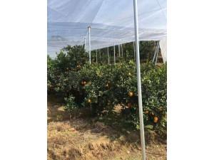 茂伦纱网大宽幅韧性大抗拉抗老化脐橙种植必用防虫害鸟啄产量高