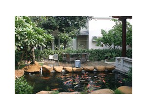 杭州锦鲤出售、鱼池过滤建设