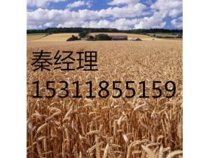 专业办理北京律师事务所的新注册和转让