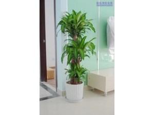 北京花卉租摆公司绿植租赁公司
